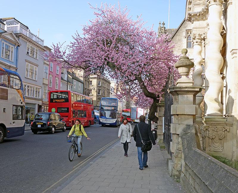 tree blossom city